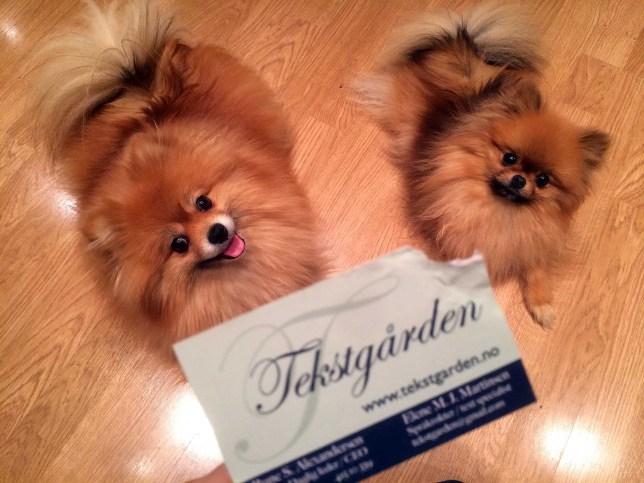 Godkjent. Visittkortene er prøvespist og godkjent av Theo og Ginny. Foto: Rune S. Alexandersen/Tekstgården (c)