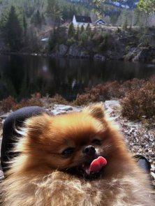DEILIG: Gartner Ginny nyter den nye hverdagen under Telemarkens sol.