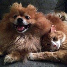 GODE VENNER: Hovmester Theo og komikerkatten Weasley nyter late dager på Sør-Rui.
