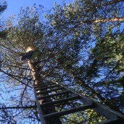 HØYT: Katta satt cirka åtte meter oppi treet. Foto: Rune S. Alexandersen (MMS)