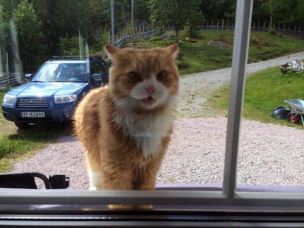 VANLIG SYN: Weasley står utenfor vinduet og vil inn. Foto: Rune S. Alexandersen (MMS)